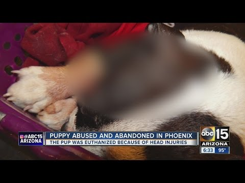 Dog euthanized after being found abused, abandoned in PHX