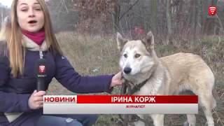 Загублена собака-поводир знайшла нового господаря, новини 2017-12-11
