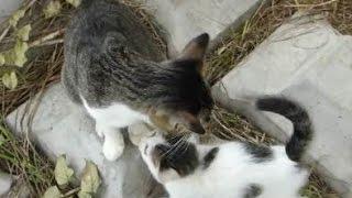 母猫の元に子猫がうじゃうじゃ集まってきた結果www