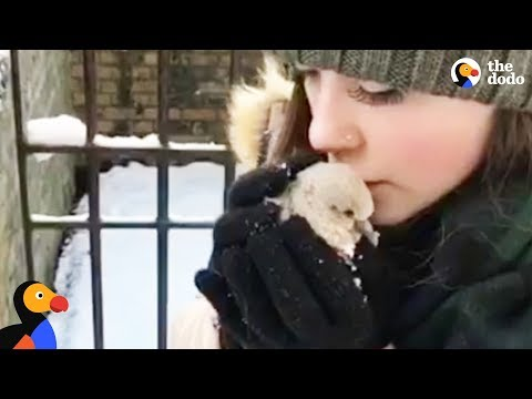 Baby Pigeon Rescued by Couple In A Snowstorm | The Dodo