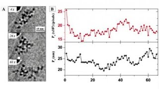 생체 핵심 요소 고분자…실시간 관찰 성공 / YTN 사…