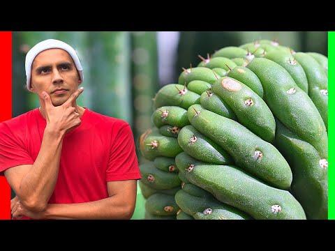 🔴Cómo CUIDAR Cactus