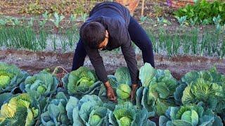 Cabbage Pakora | Patta Gobi Ke Pakode