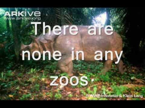 Save the Javan Rhinos