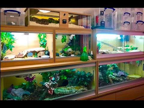 REPTILE ROOM SPECIAL! (February 2017)