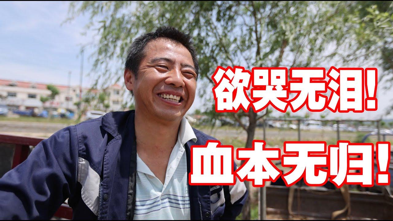 实体探访中国最大的大樱桃集散地,山东樱桃崩盘,农民收入惨痛