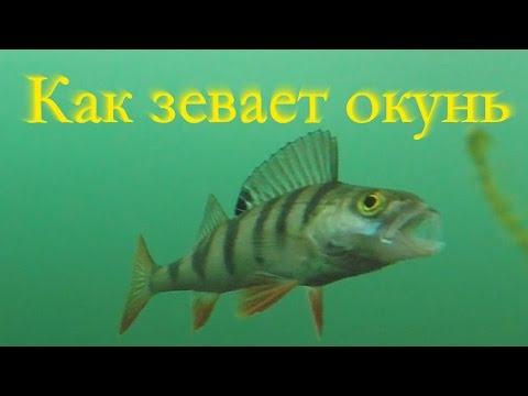 стихи рыбалка про окуня стихи