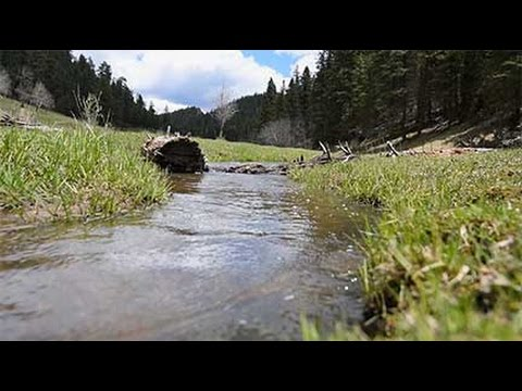 Wildlife and Sport Fish Restoration (WSFR) Rio Grande Cutthroat Trout