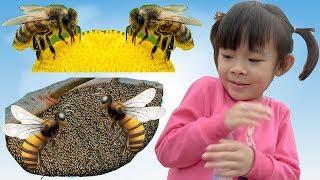 bé khám phá và nghiên cứu tổ ong mật rừng ❤ anan toysreview tv ❤