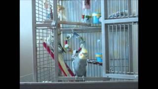 Pet Bird Clicker Training