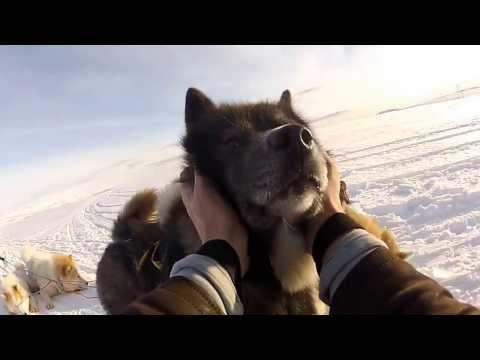 Dogsledding Iceland