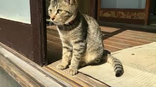 【小梅】縁側でのんびり。布団上でお菊と遊ぶ小梅 Today's cat 2019/02/23