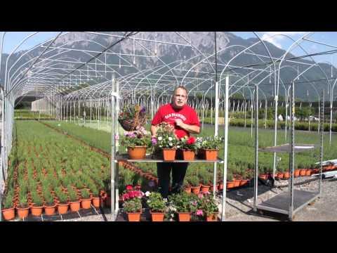 Allgemeine Tipps zum bepflanzen von Blumenkästen