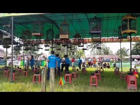 Download Lagu LOMBA KONTES KICAU BURUNG KENARI A DI LAPANGAN BOLA TARAKAN SINGKAWANG