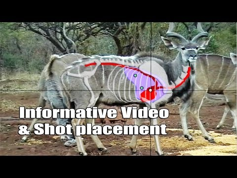 Bow Hunting Kudu