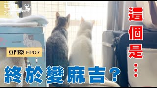 【SoybeanMilk vs. Junrong EP07】Cats finally became best buddies?