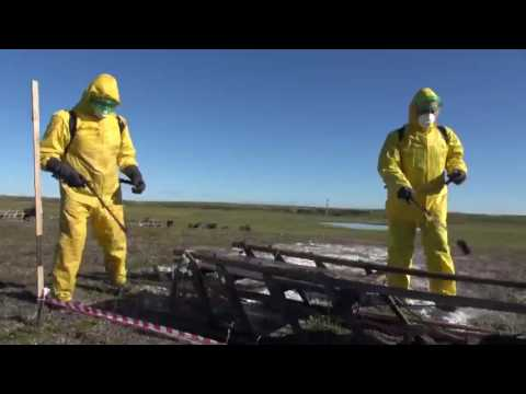 Russia Tackles Anthrax Outbreak in Siberia - Part 1