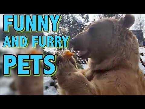 Funny and Furry Pets || Funny Animal Videos