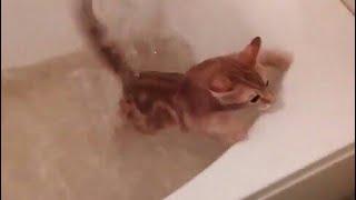 g♥кошка падает в ванну♥Я ненавижу воду♥кот Котик Кошечка кошки милый смешной