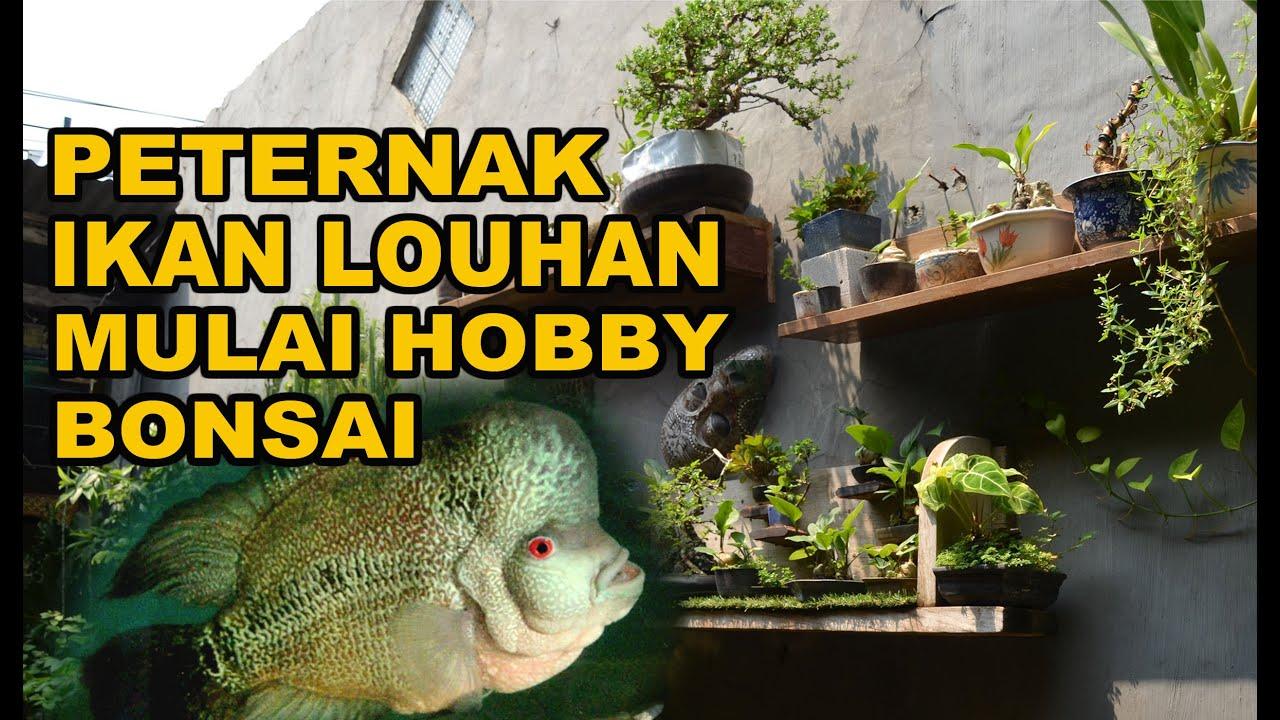 Berkunjung Ke Rumah Teman, Peternak Ikan Louhan Yang Mulai Hobby Bonsai