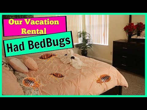 Our Vacation Rental Had Bed Bugs | Moving To Florida | Family Vlogs