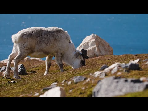 Spitsbergen: Arctic Wildlife Safari