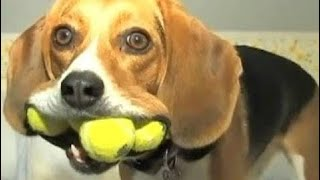 The most funny moments of Animals - Animals are so funny that you can die of laughter  # 47