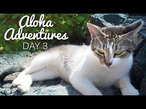 WILD KITTENS!?   Aloha Adventures [Day 3]