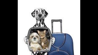 Если с другом вышел в путь...Отправляясь в отпуск с питомцем, изучите правила перевозки животных