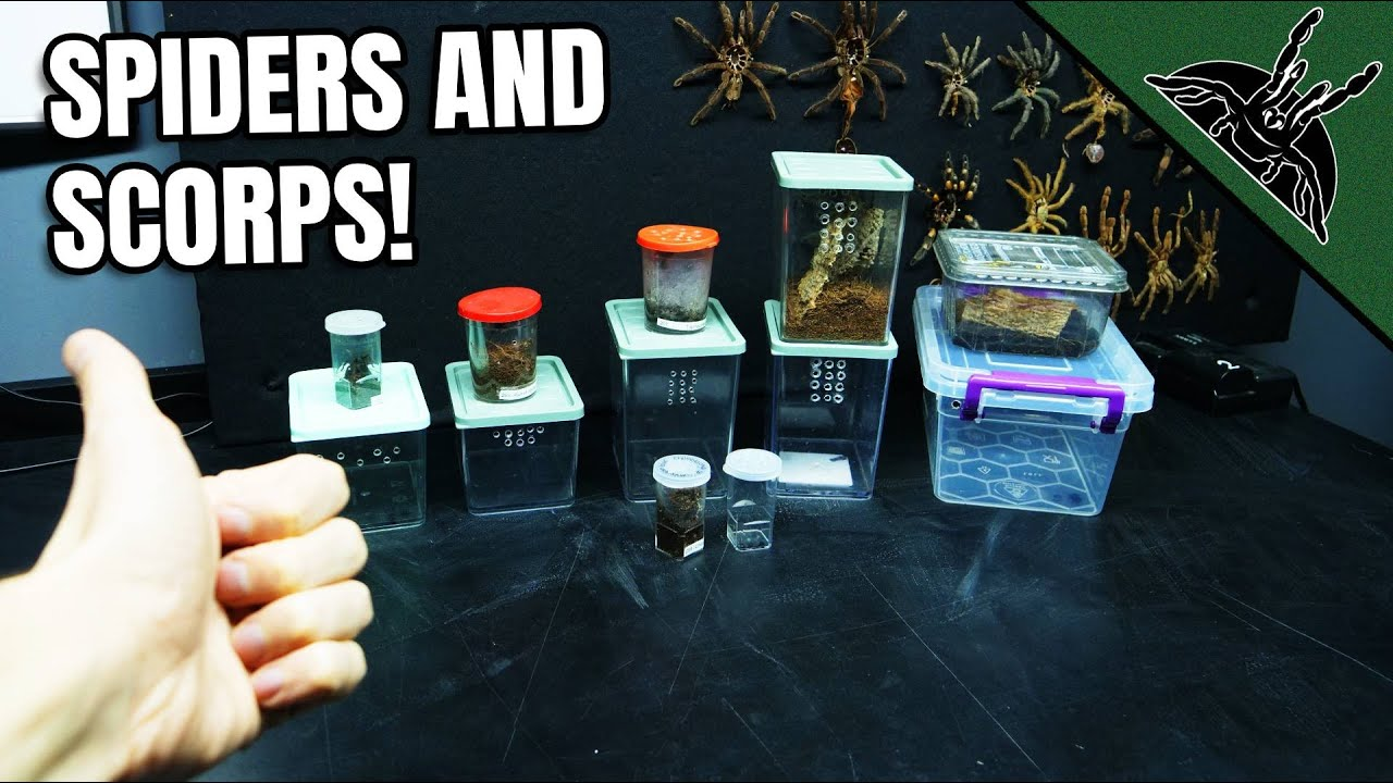 When SPIDERS need more space... - download from YouTube for free