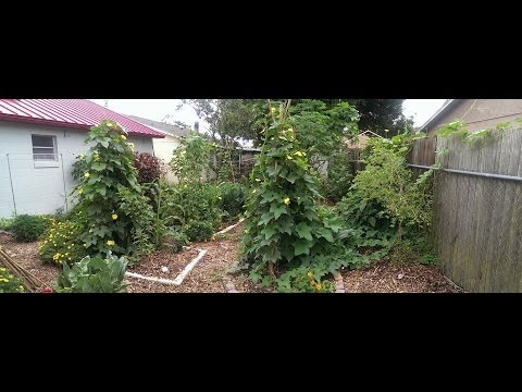 July Update: Urban Permaculture Garden
