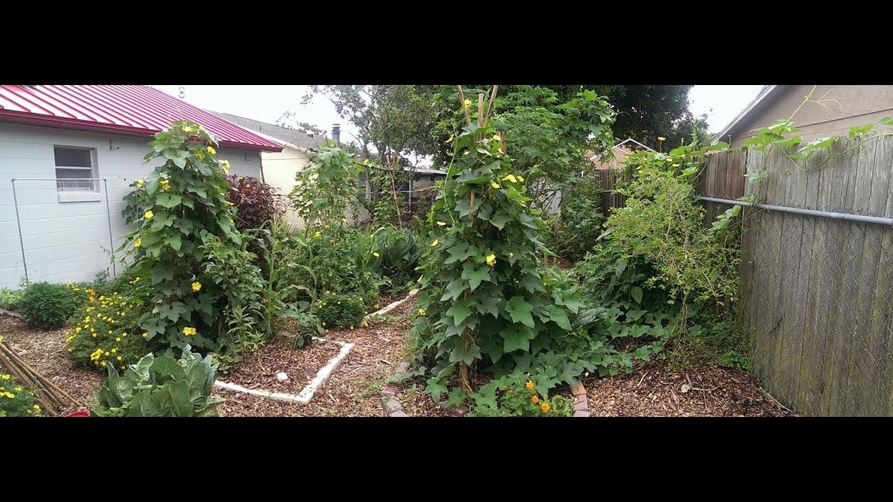 July Update: Urban Permaculture Garden - YouTube on Backyard Permaculture Design id=76534