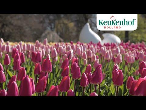 Enjoy this new video of our beautiful park!🌷 - Keukenhof Virtually Open