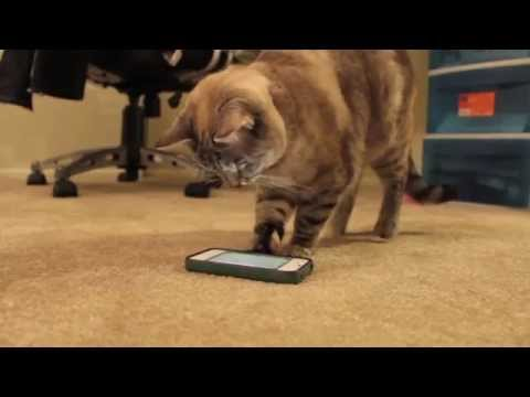 IPhone Ve IPad Ile Oynayan Kedi