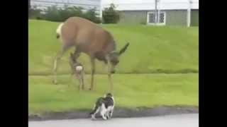 Коты против собак и оленей