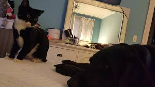 Big Blue and dog run kitty 11/11/18