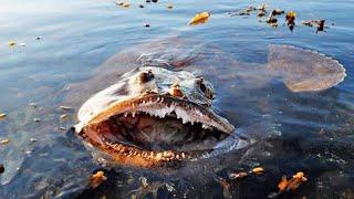 Самые опасные места в морях и океанах, которые следует избегать