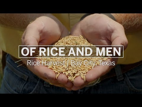 of-rice-and-men-|-south-texas-rice