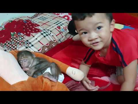 Baby Monkey | The Nap Time Of Doo And Kids