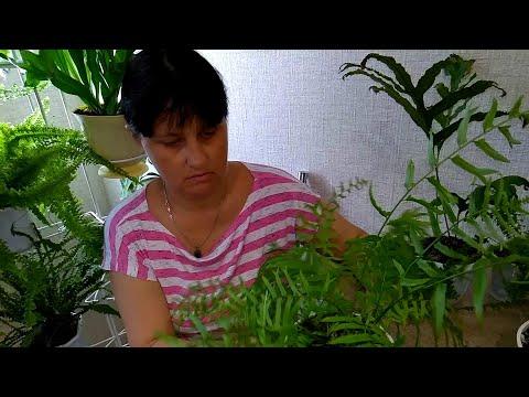 Вопрос: Как вернуть пестролистность комнатным растениям?