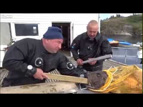 FULL] Russian Diver's Agony After Monkfish Bites Hand