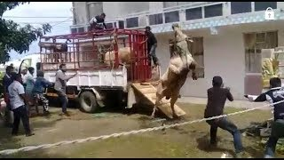 Bakrid 2017 ~ Angry Brahman