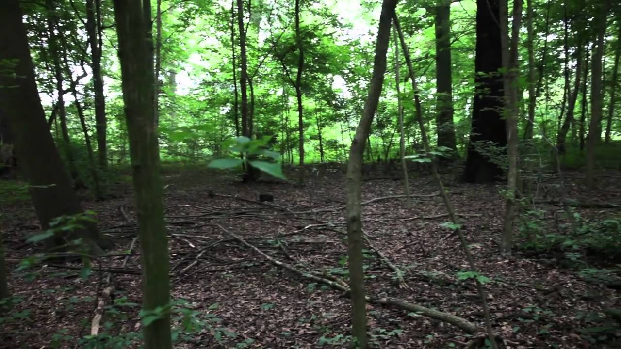 Janet Cardiff & George Bures Miller | FOREST (for a thousand