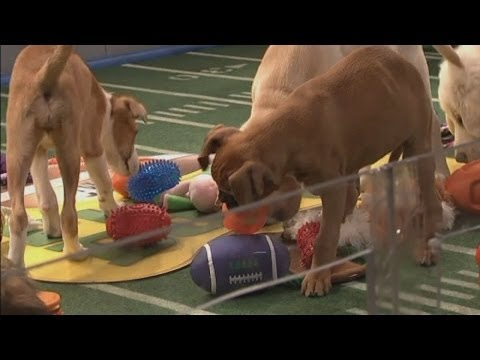 Puppy Bowl 2014: Cute puppies outshine the Super Bowl in New York