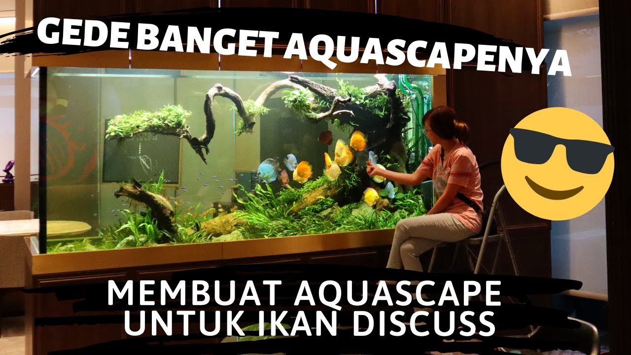 Membuat Aquascape Untuk Ikan Discuss Gede Banget Aquascapenya Buatnya Aja Dari Dalem Youtube