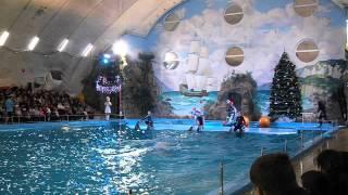 Супер-шоу дельфинов 1 !!! (Харьков, дельфинарий)