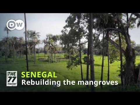 Senegal's massive reforestation project