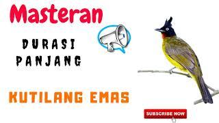 Masteran Kutilang Emas Gacor Full Isian Jernih Durasi Panjang mp3