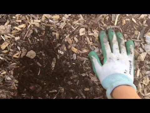 Why mulch with woodchips?  They're so much more than a weed barrier!