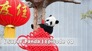 【Super Panda】Episode 90 | iPanda